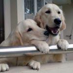 Recomendaciones para convivir con el perro en una Comunidad de Propietarios