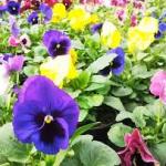 Preparando los jardines en las Comunidades de Propietarios para el otoño inverno